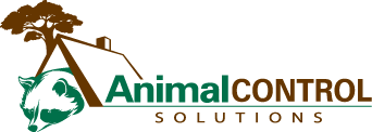 Animal Control Solutions Wildlife Removal